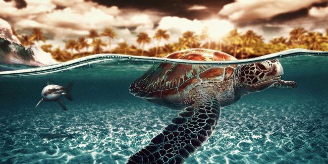 TurtlesSharksl