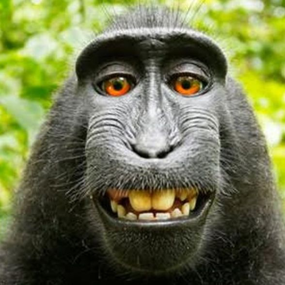 _85730600_monkey2